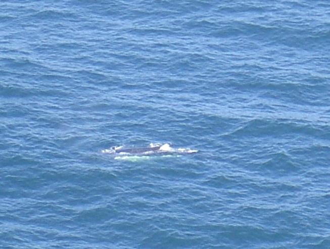 Whale Watching Walk: MacMasters – Kilcare