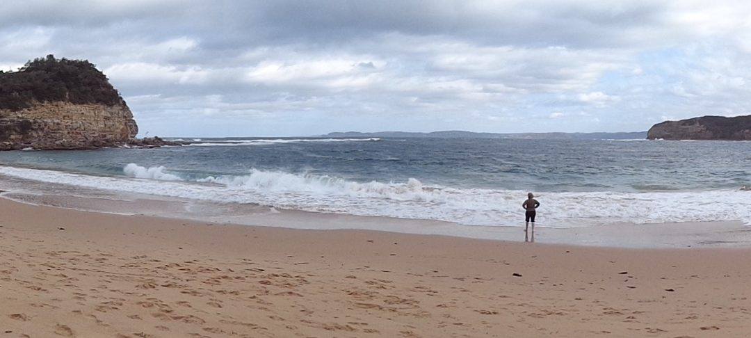 Whale Watching Walk, Bouddi NP