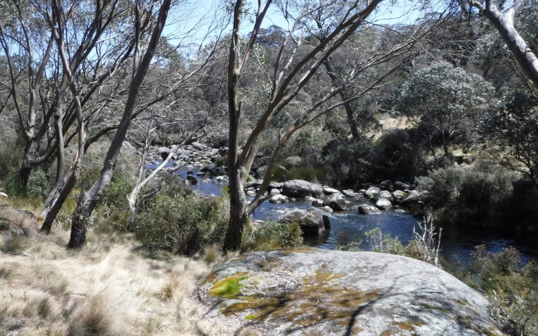Corker Trail to Wombat Creek